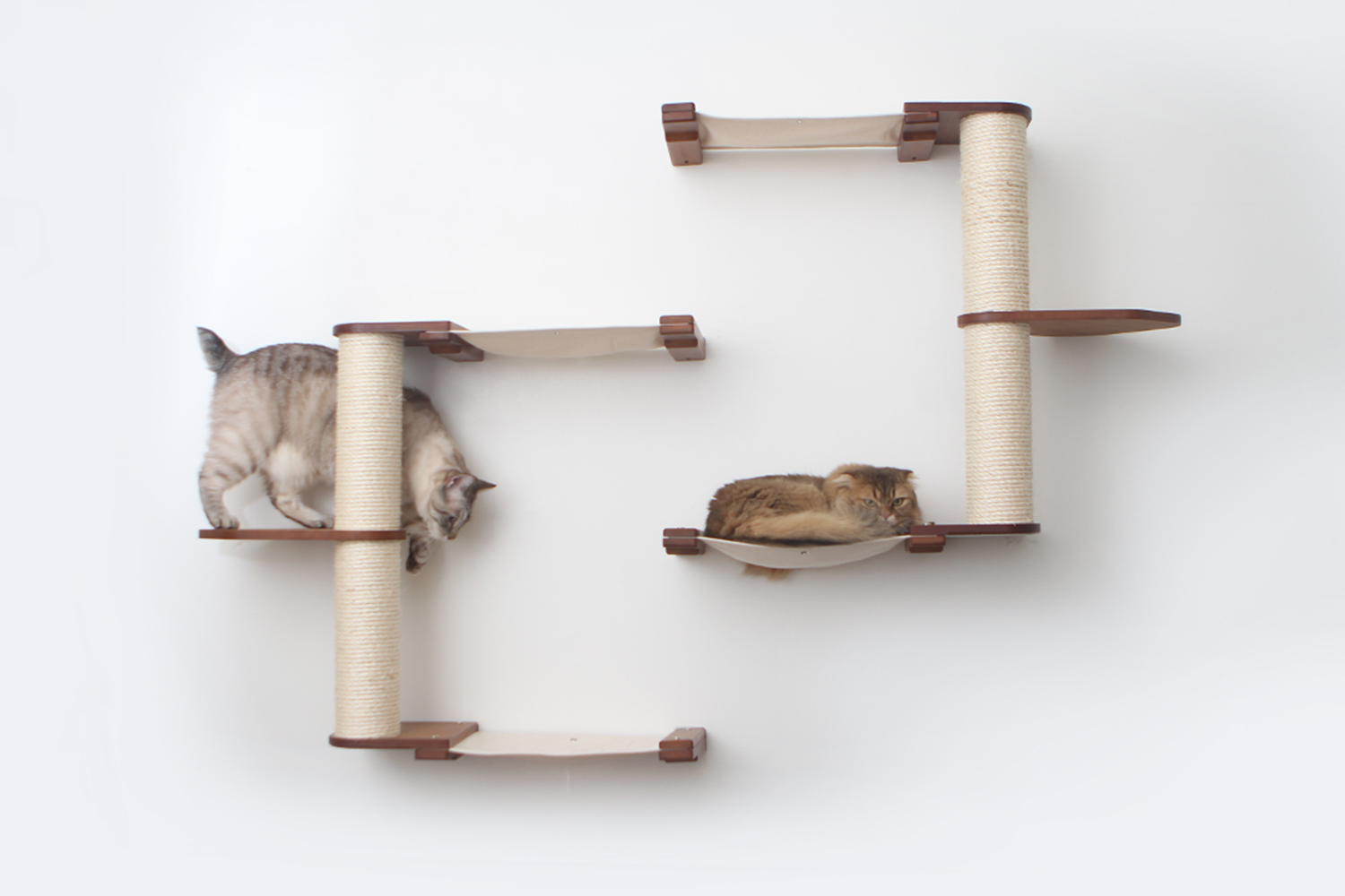 catacombs complex wall mounted cat furniture with angry brown cat and gray tabby