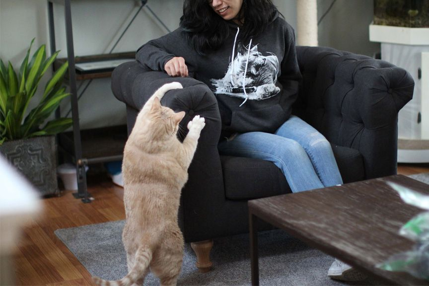Bronson playing with model who is wearing a dark gray Bronson hoodie
