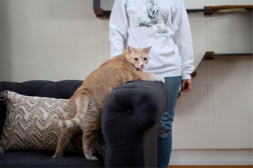 Bronson being cute with gray sweatshirt modeled behind him