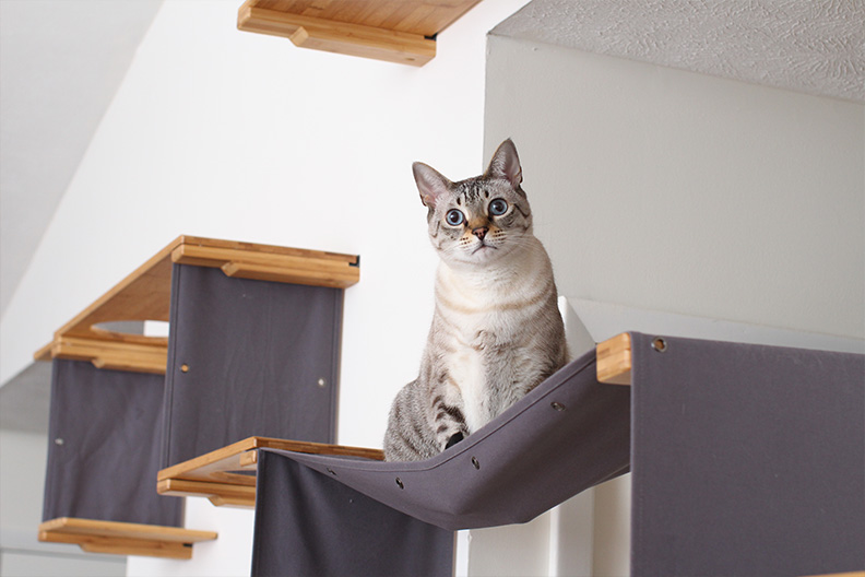 Cat on cat hammock