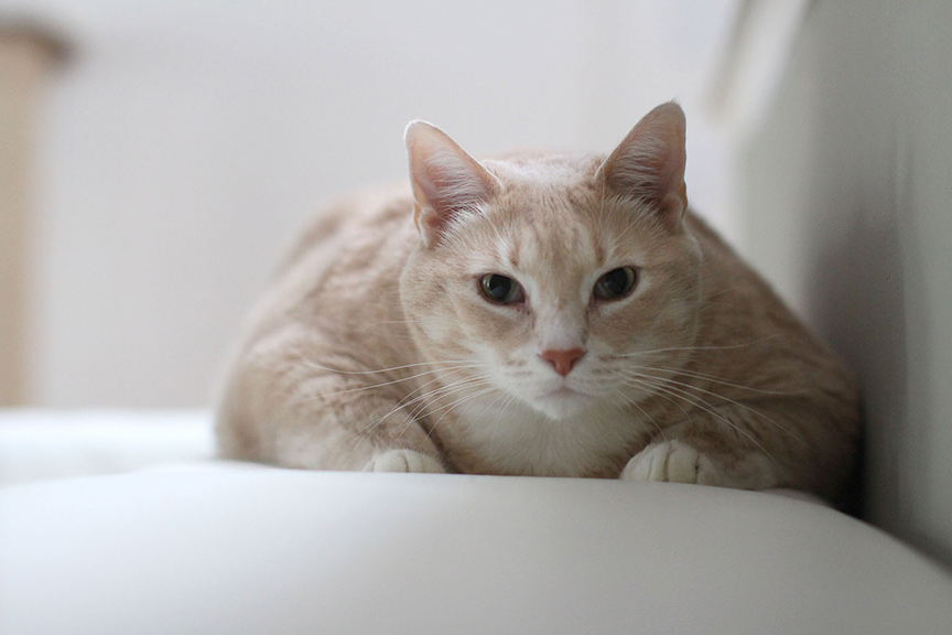 Bronson cat sitting on comfy cushion