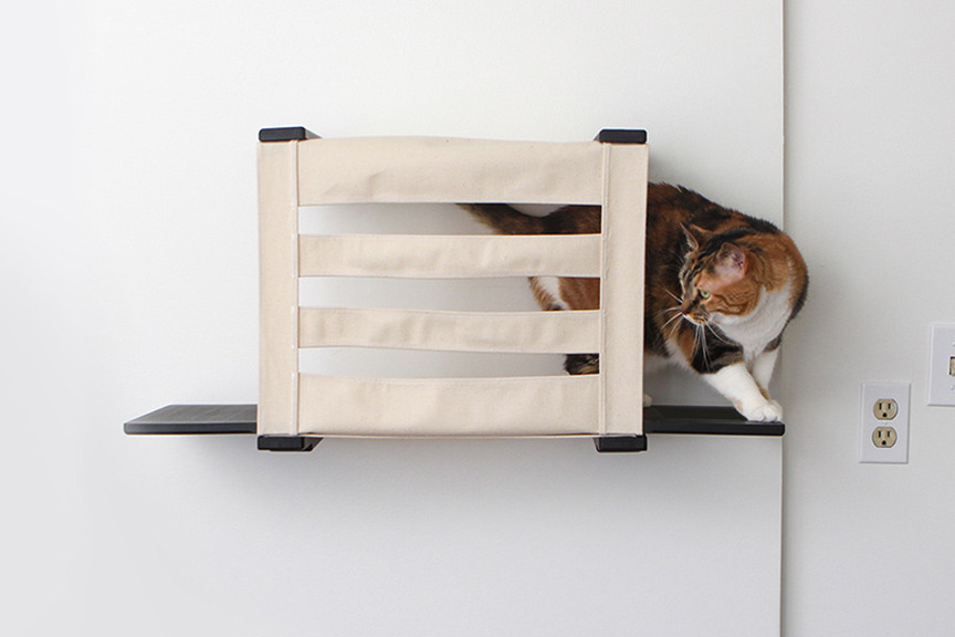 cat on wall mounted cubby shelf
