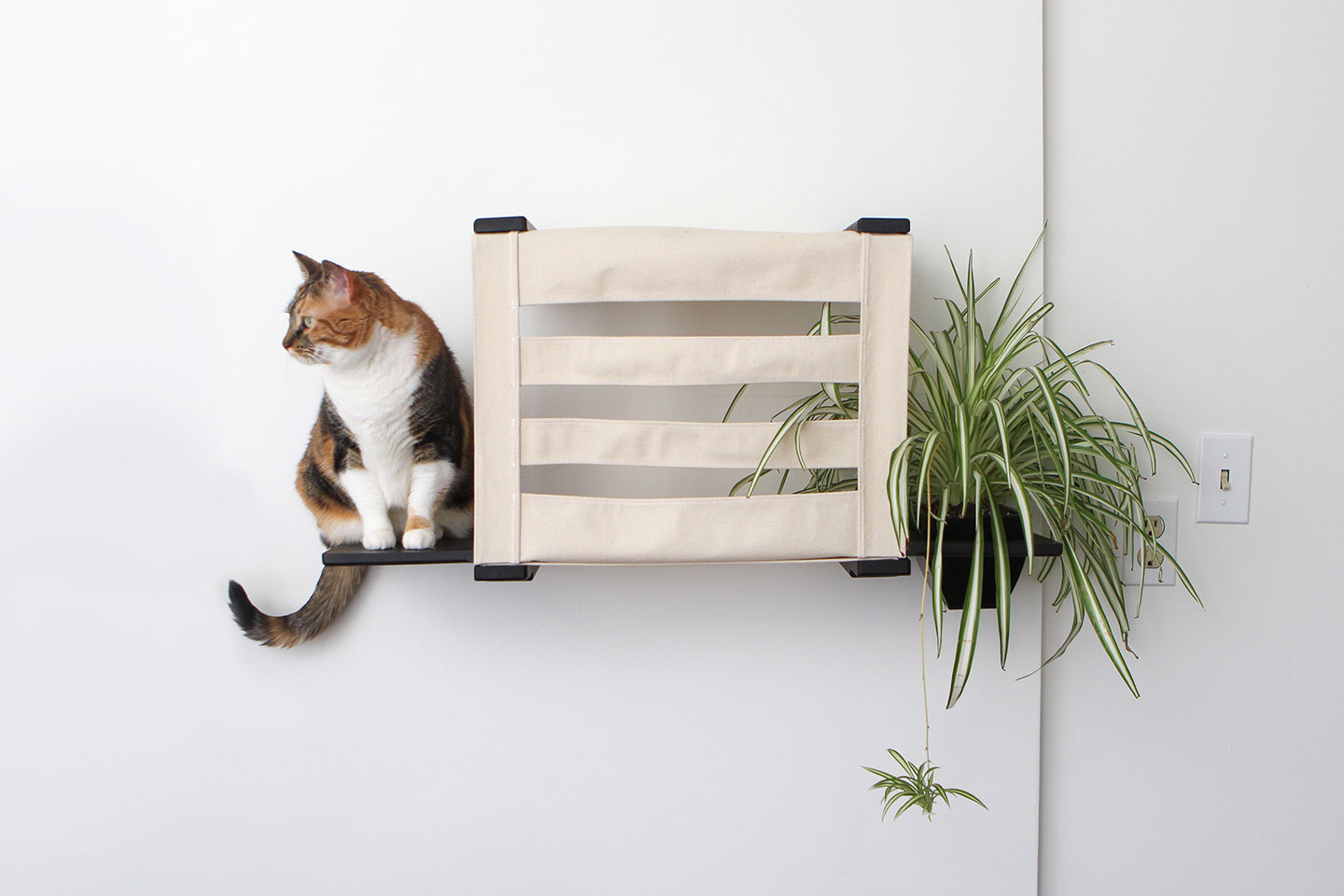 Wall mounted cat tunnel cubby with planter and ledges tabby cat relaxing on ledge