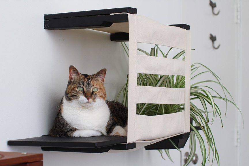 Wall mounted cat tunnel cubby with ledges and a cute tabby cat
