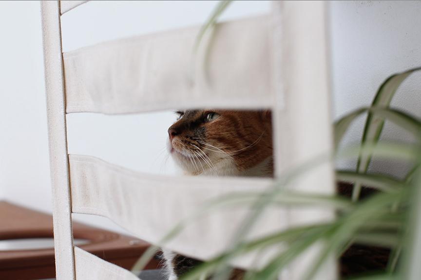 cat peeking behind wall mounted cubby