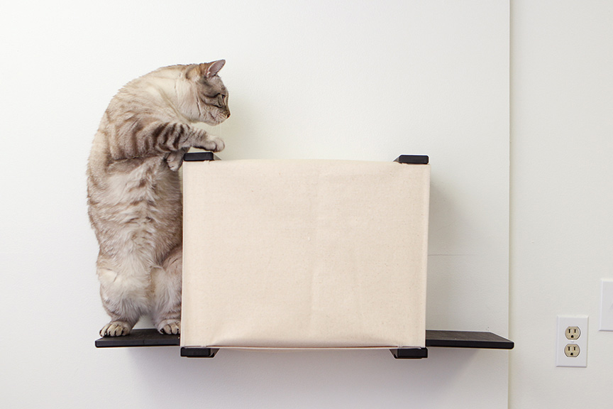 cat jumping on wall mounted cubby