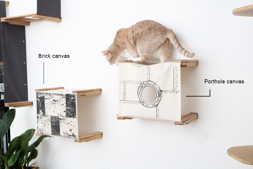 cat on wall mounted cubbies