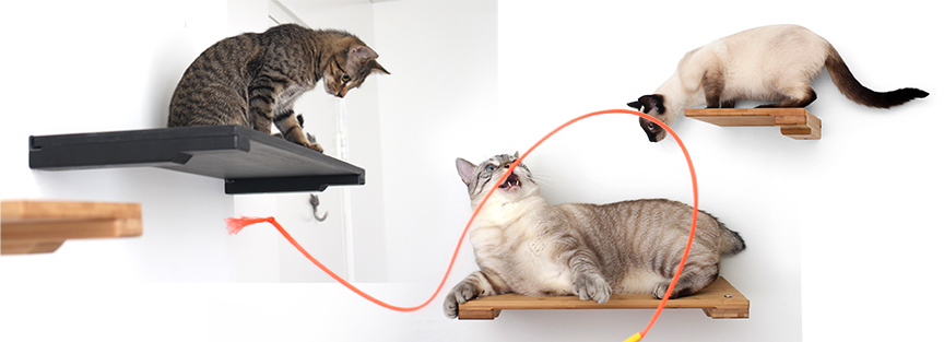 Cats playing on cat shelves