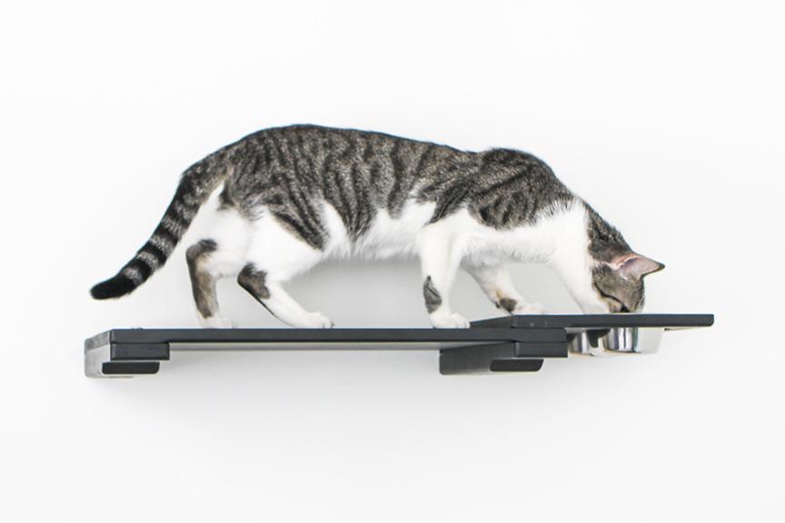 cat eating on feeder shelf