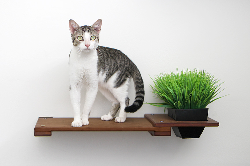 """White and brown striped cat sitting on 18"""" Shelf with Planter add-on"""