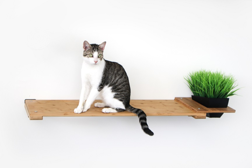 """White and brown striped cat sitting on 34"""" Shelf with Planter add-on"""