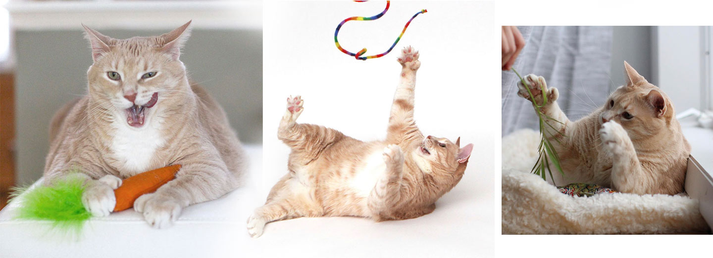 Cat Toy examples