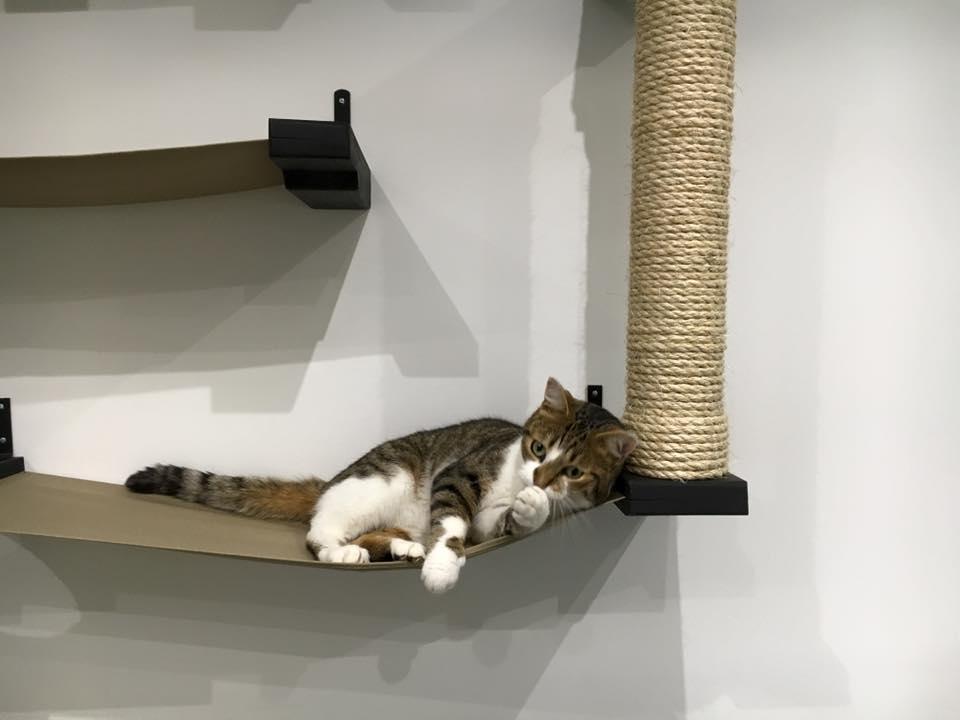 kitten laying on wall mounted cat furniture