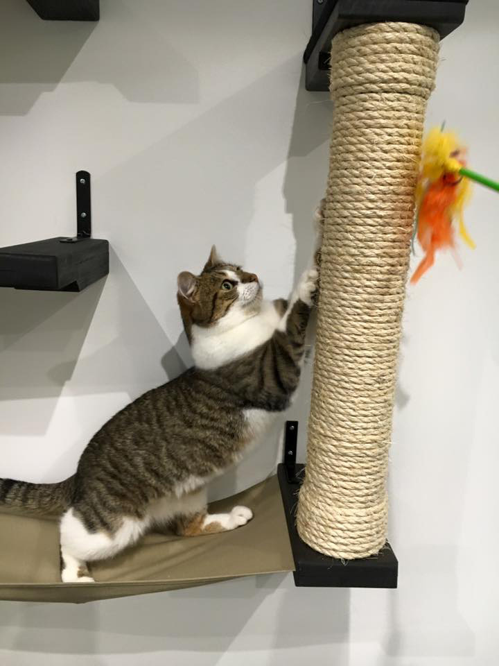 cat playing on scratching post