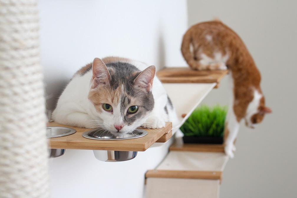 cat eating on cat condo