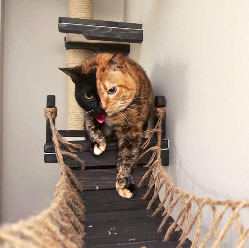 cat on cat bridge