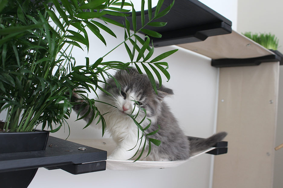 Kitten playing on cat hammock