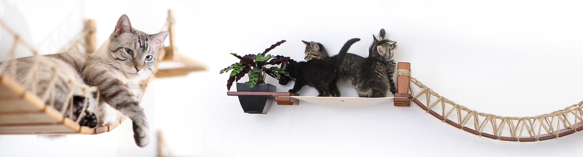 cats lounging on cat bridge