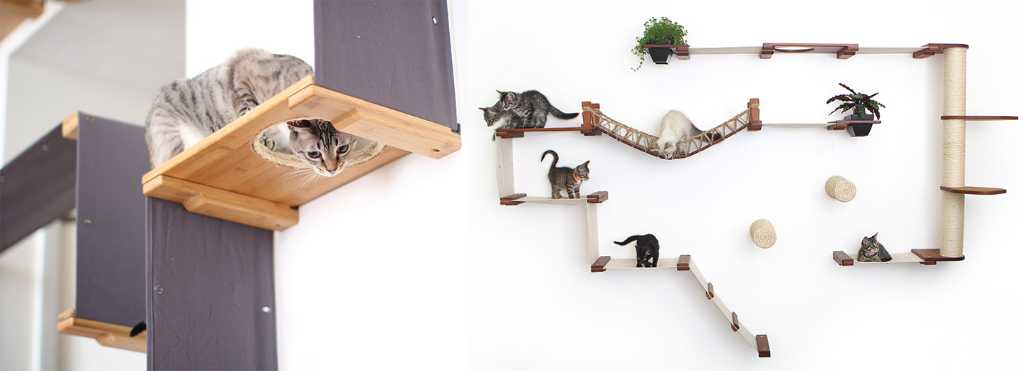 cats playing on cat condoss