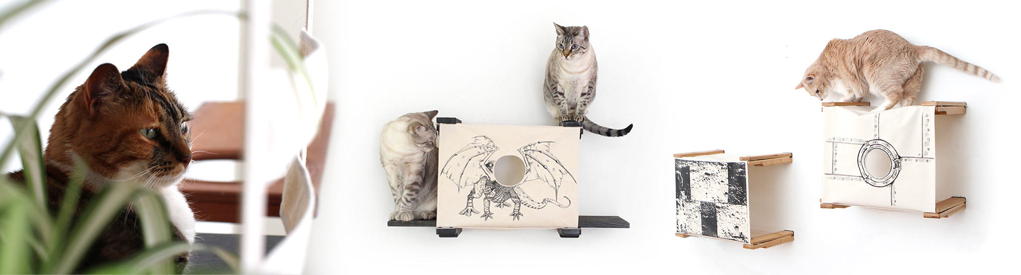 cats playing on cat furniture