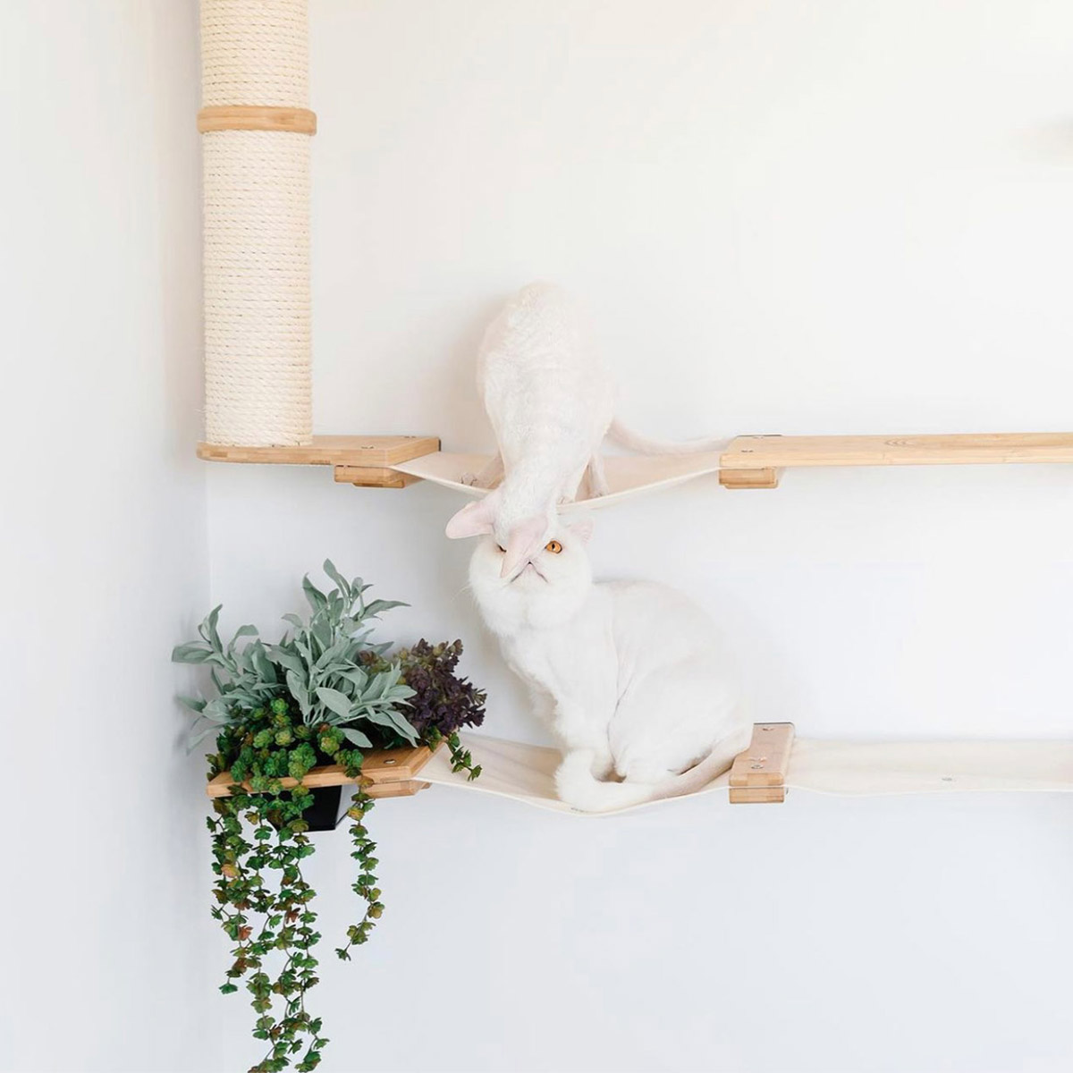 two white cats on wall mounted cat furniture