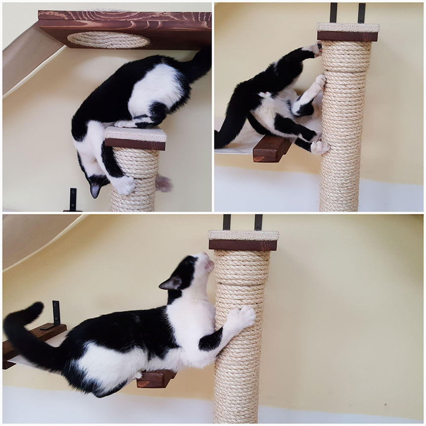 photo collage of cat laying on scratching post