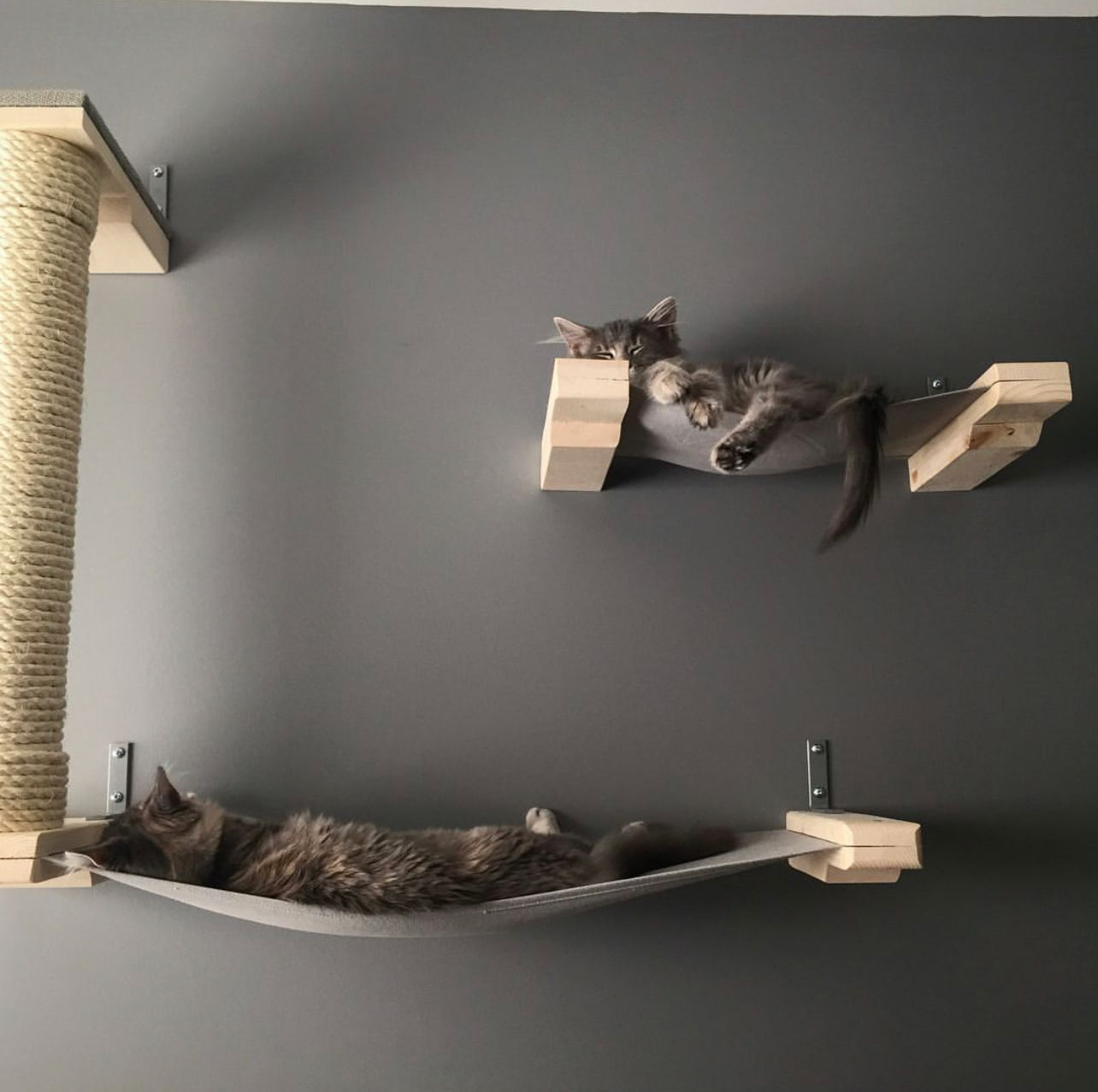 cats on wall mounted cat furniture