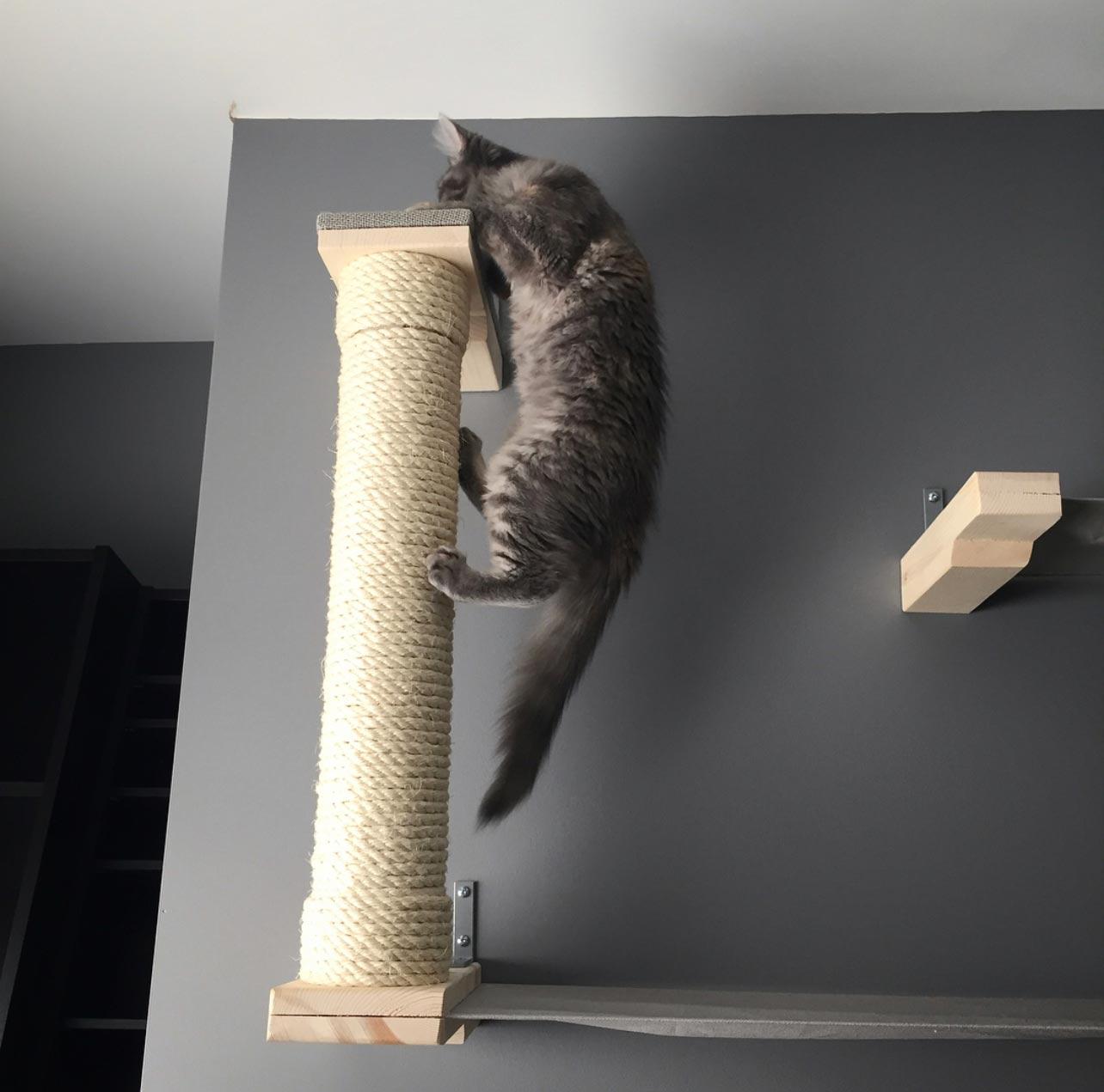 cat climbing scratching post
