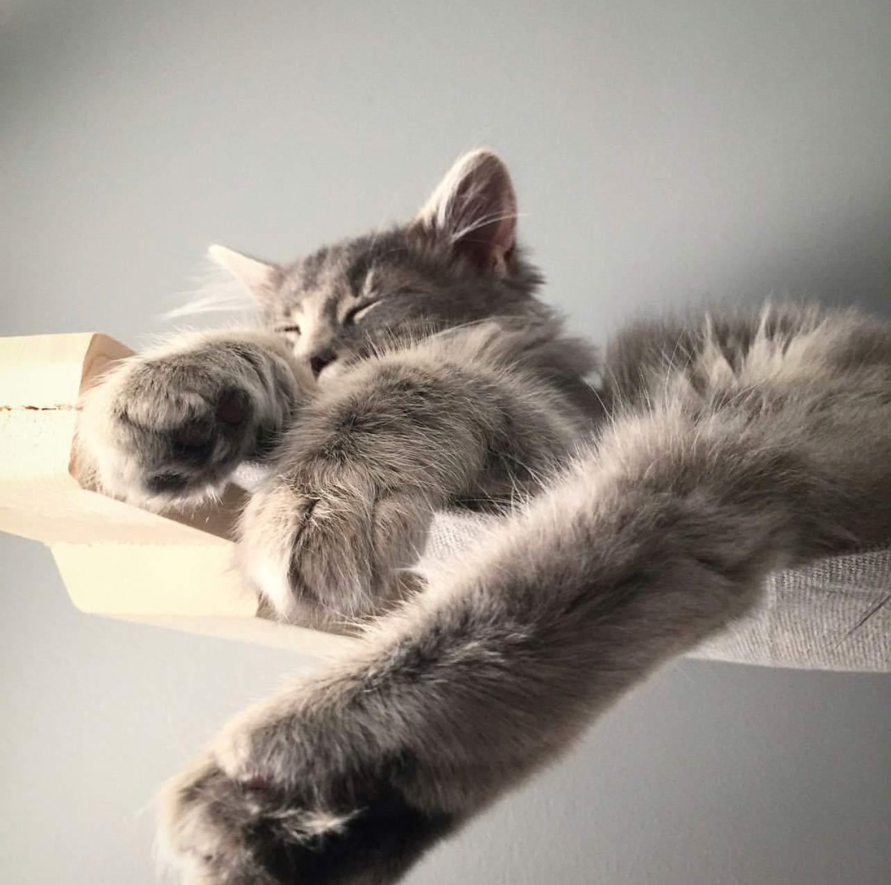 kitten sleeping on wall mounted cat furniture