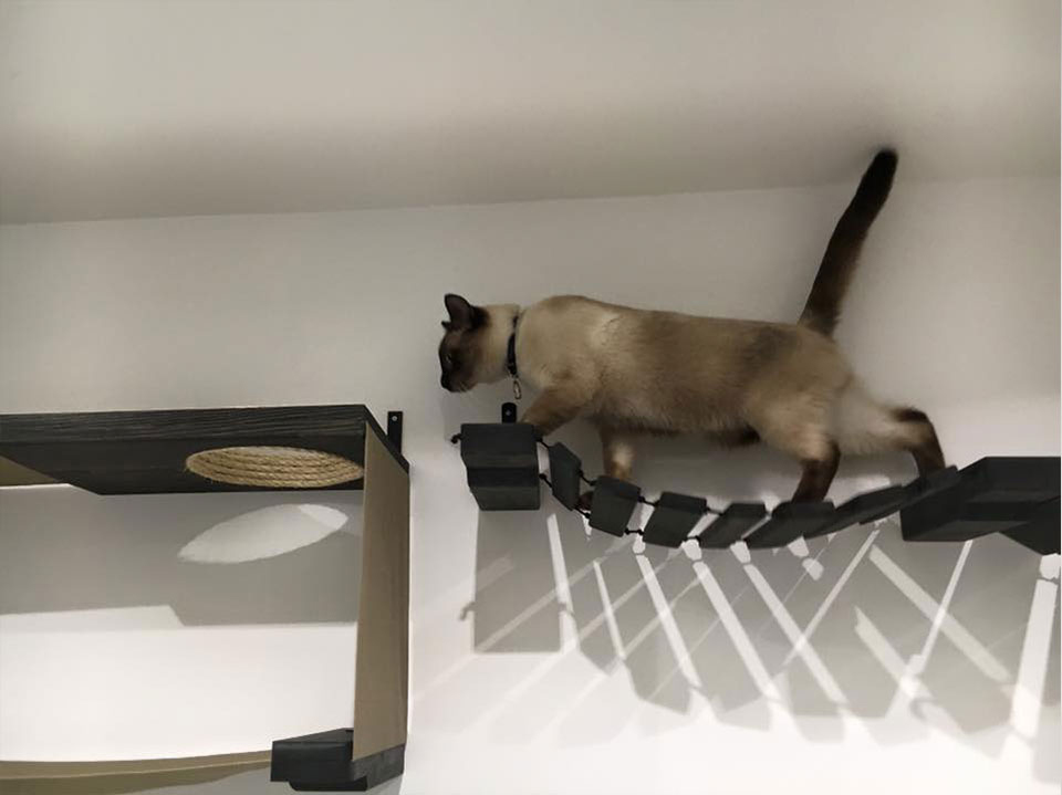 cat on wall mounted cat furniture