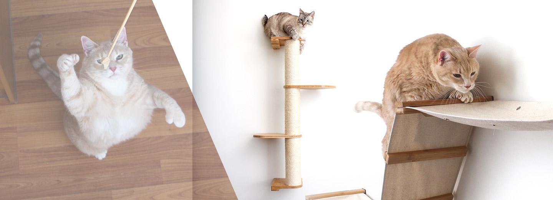 cat's exercising