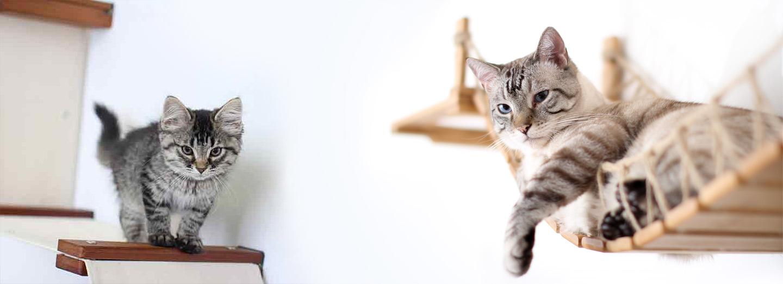 cat s with bad attitudes