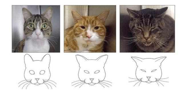 cats showing pain levels